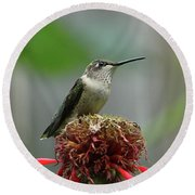 Humming Bird Atop Bee Balm Round Beach Towel by David Stasiak