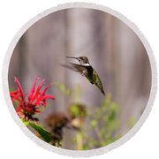 Humming Bird Hovering Round Beach Towel by David Stasiak