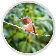 Humming Bird On Stick Round Beach Towel