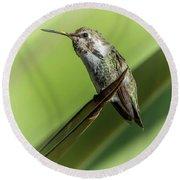 Hummingbird 7484-101017-2cr Round Beach Towel