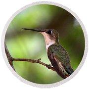 Hummingbird - Afternoon Ruby Round Beach Towel by Travis Truelove