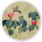 Hummingbird And Japanese Camillea Round Beach Towel