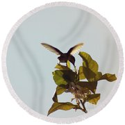 Round Beach Towel featuring the photograph Hummingbird And Lemon Blossoms by Cindy Garber Iverson