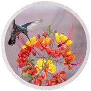 Hummingbird At Work Round Beach Towel