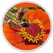 Hummingbird Delight Round Beach Towel