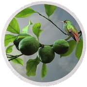 Hummingbird In Lime Tree Round Beach Towel
