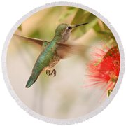 Hummingbird In Paradise Round Beach Towel by Penny Meyers