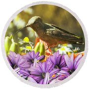 Round Beach Towel featuring the photograph Hummingbird In The Spring Rain by Diane Schuster