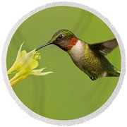 Hummingbird Round Beach Towel by Mircea Costina Photography
