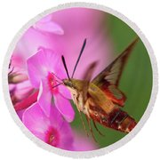 Hummingbird Moth Feeding 1 Round Beach Towel