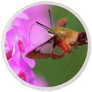 Hummingbird Moth Feeding 2 Round Beach Towel