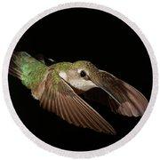 Hummingbird On Black Round Beach Towel