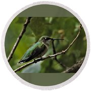 Hummingbird On Branch Round Beach Towel
