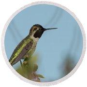 Hummingbird On Watch Round Beach Towel