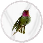 Hummingbird Portrait T1 Round Beach Towel
