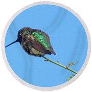 Hummingbird Resting  Round Beach Towel by Tom Janca