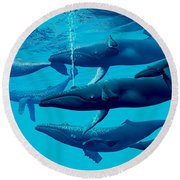 Humpback Whale Group Round Beach Towel by Corey Ford