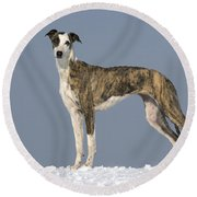 Hungarian Greyhound Round Beach Towel