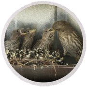 Round Beach Towel featuring the photograph Hungry Chicks by Alan Toepfer