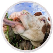 Hungry Cow Eating Grass Funny Picture Round Beach Towel