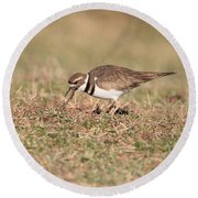 Hungry Killdeer Round Beach Towel by Karen Silvestri