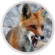 Round Beach Towel featuring the photograph Hungry Red Fox Portrait by Debbie Oppermann
