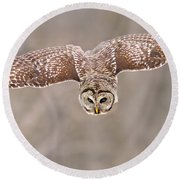 Hunting Barred Owl  Round Beach Towel by Mircea Costina Photography