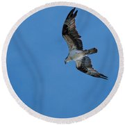 Hunting Osprey Round Beach Towel