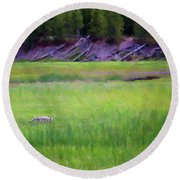 Round Beach Towel featuring the photograph Hunting by Sue Collura