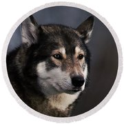 Husky Round Beach Towel by  Newwwman