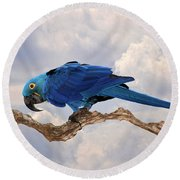 Hyacinth Macaw Round Beach Towel by Wade Aiken