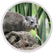 Hyrax Round Beach Towel