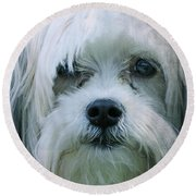 I Can Explain - Dog Mania Print Round Beach Towel