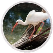 Round Beach Towel featuring the photograph Ibis Fishing by Sheila Brown