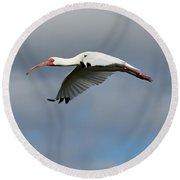 Ibis In Flight Round Beach Towel by Carol Groenen