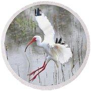 Ibis Soft Water Landing Round Beach Towel by Carol Groenen
