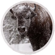 Ice Cold Winter Buffalo Round Beach Towel