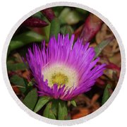 Round Beach Towel featuring the photograph Ice Plant Flower by Adria Trail