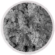 Iced Cottonwoods Round Beach Towel by Colleen Coccia