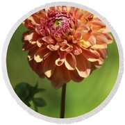 Iced Tea Dahlia In Marzipan And Milano Tones Round Beach Towel