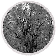 Iced Tree Round Beach Towel