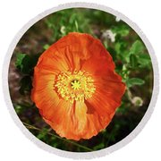 Round Beach Towel featuring the photograph Iceland Poppy by Sally Weigand