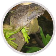 Round Beach Towel featuring the photograph Iguana - A Special Garden Guest by Christiane Schulze Art And Photography