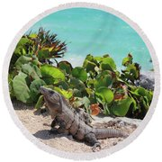 Round Beach Towel featuring the photograph Iguana At Tulum by Roupen  Baker