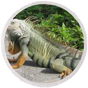 Round Beach Towel featuring the photograph Iguania Sunbathing by Christiane Schulze Art And Photography