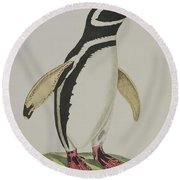 Illustration Of A Penguin Round Beach Towel