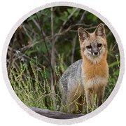 Round Beach Towel featuring the photograph I'm Back by Norman Peay