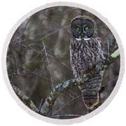 I'm Hungry- Great Gray Owl Round Beach Towel