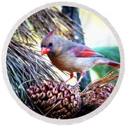 Img_0311 - Northern Cardinal Round Beach Towel