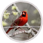 Img_2027-004 - Northern Cardinal Round Beach Towel